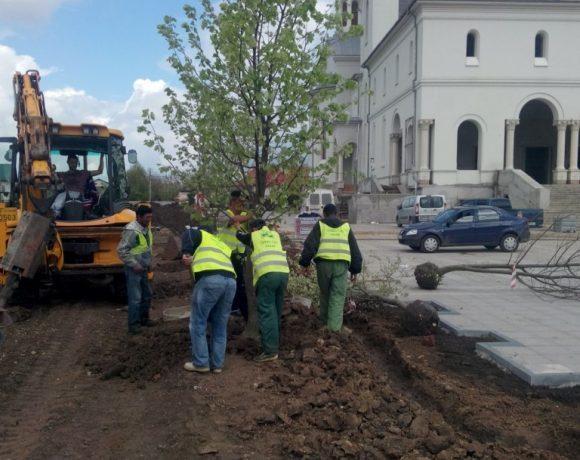 Amenajare spatiu verde Catedrala Voluntari