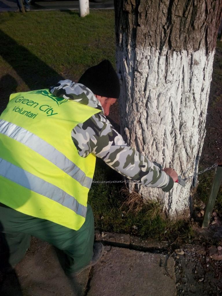 Amenajare spatiu verde B-dul Voluntari